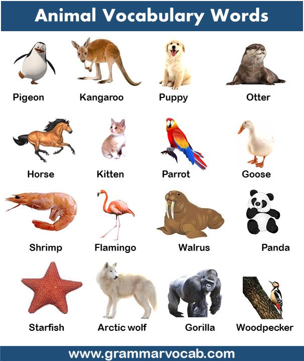 common English vocabulary