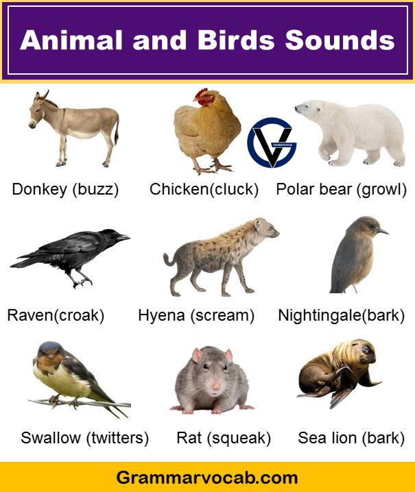 Animal and Birds Sounds List