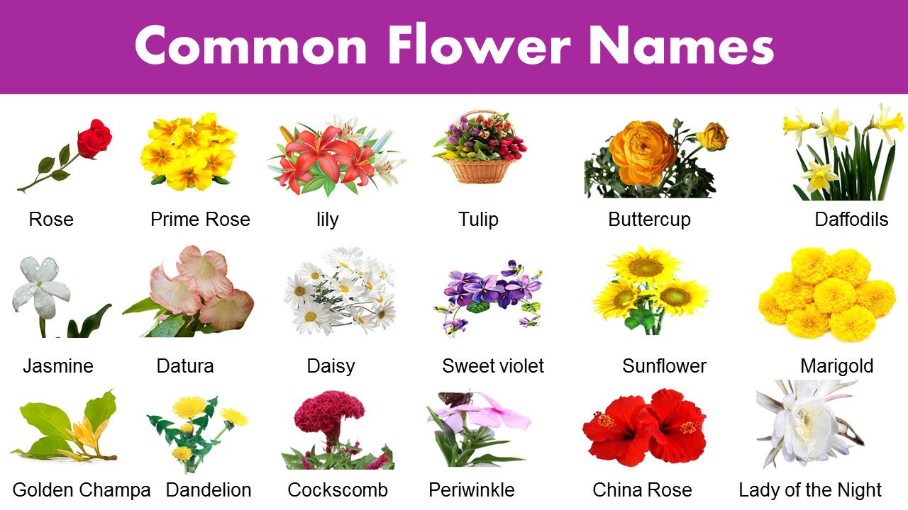 List of Common Flower Names