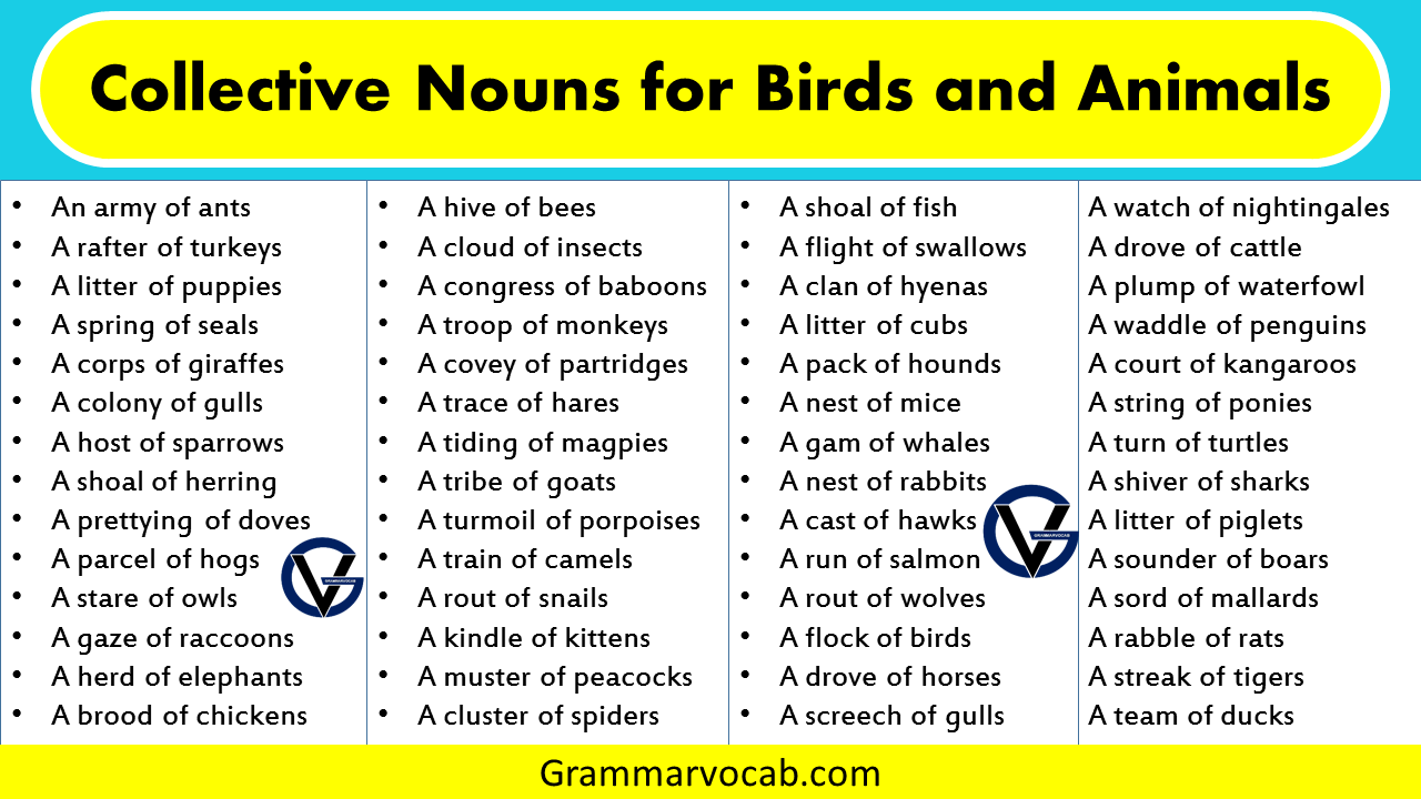 List of Collective Nouns for Birds and Animals