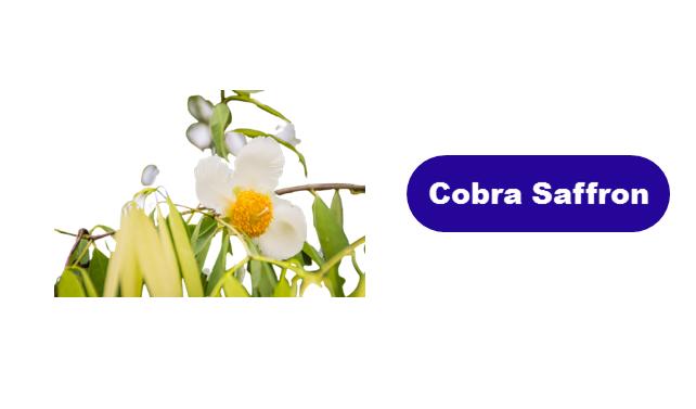 Cobra Saffron